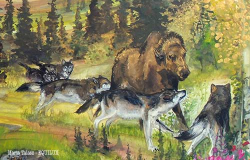 Wolves hunting moose by Maria Talasz