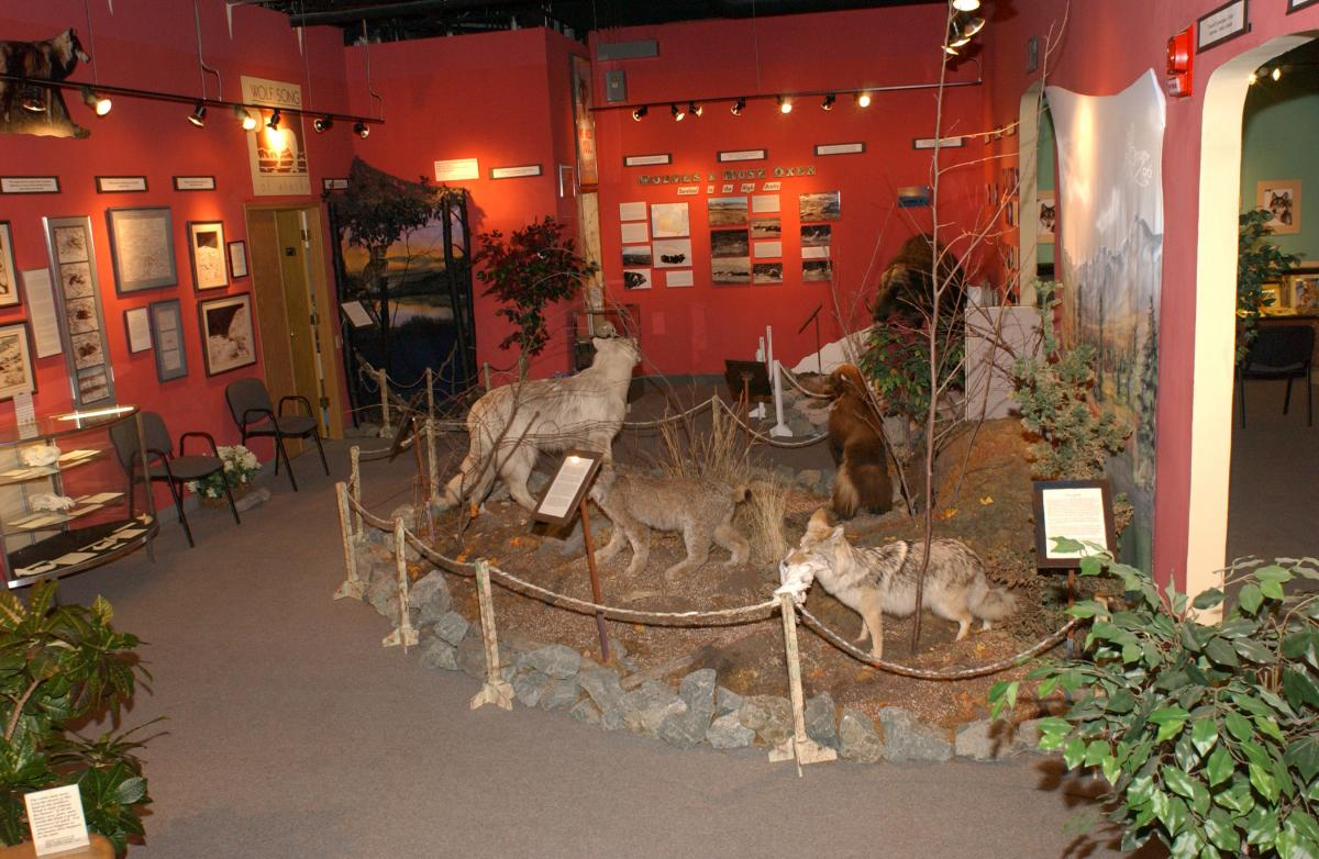 Wolf Museum in Anchorage